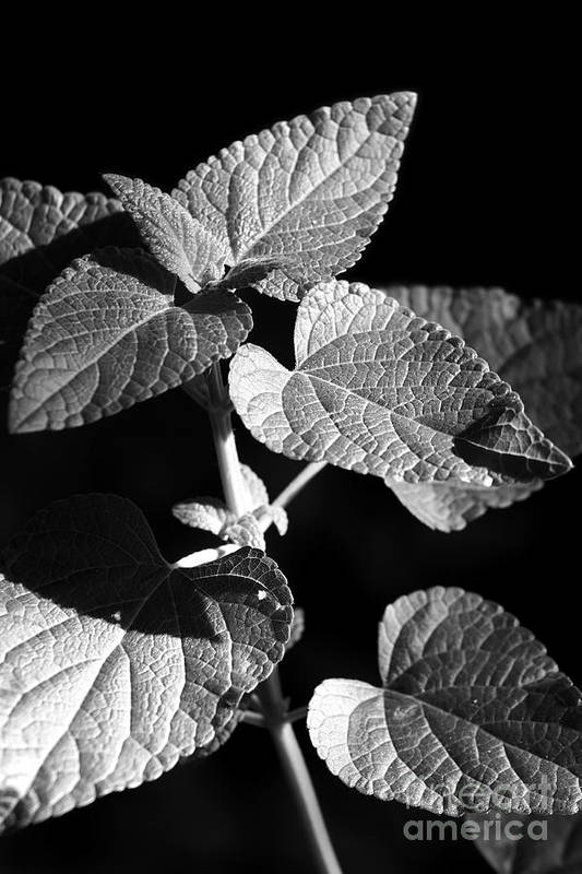 Light Art Print featuring the photograph Light And Shadow by Jeannie Burleson