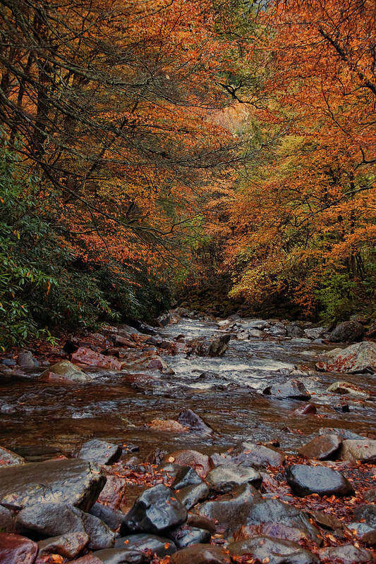 Smoky Mountains Art Print featuring the photograph Little Pigeon River In Autumn by Randy Ball
