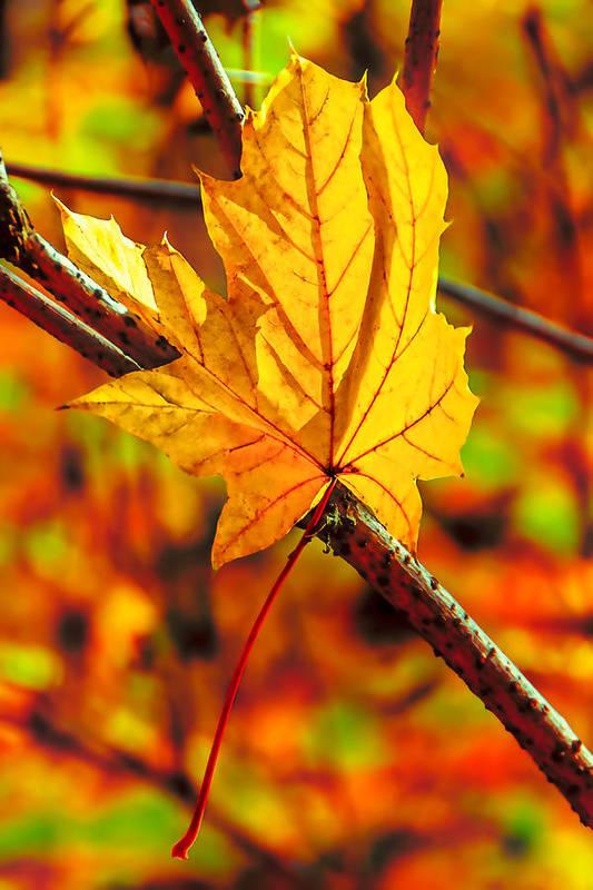 Autumn Art Print featuring the photograph Leaving Autumn by Serhii Simonov