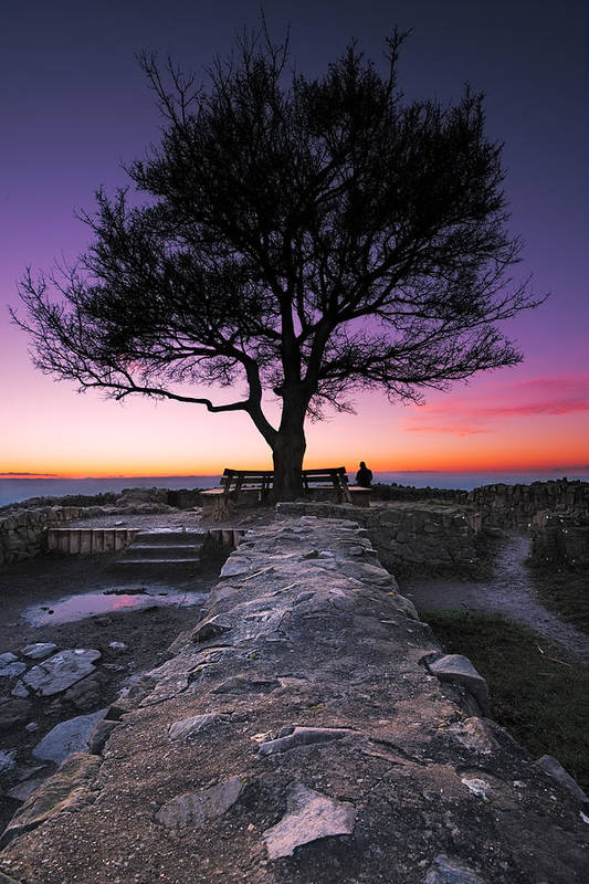 Tree Art Print featuring the photograph Loewenburg by Andre Distel