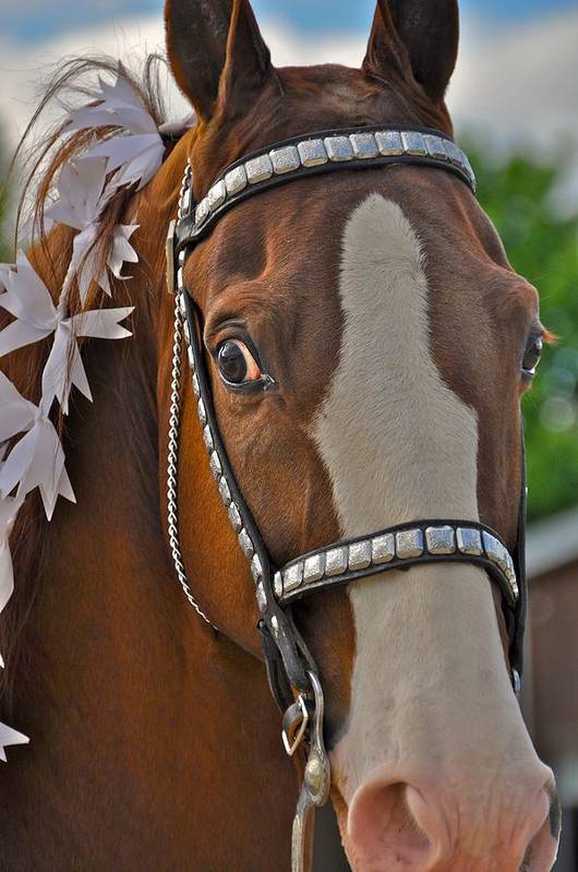 Horse Art Print featuring the photograph Looking by Sherri Cavalier
