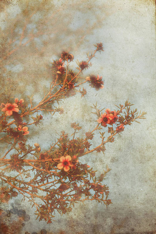 Flowers Art Print featuring the photograph Love Is In Bloom by Laurie Search