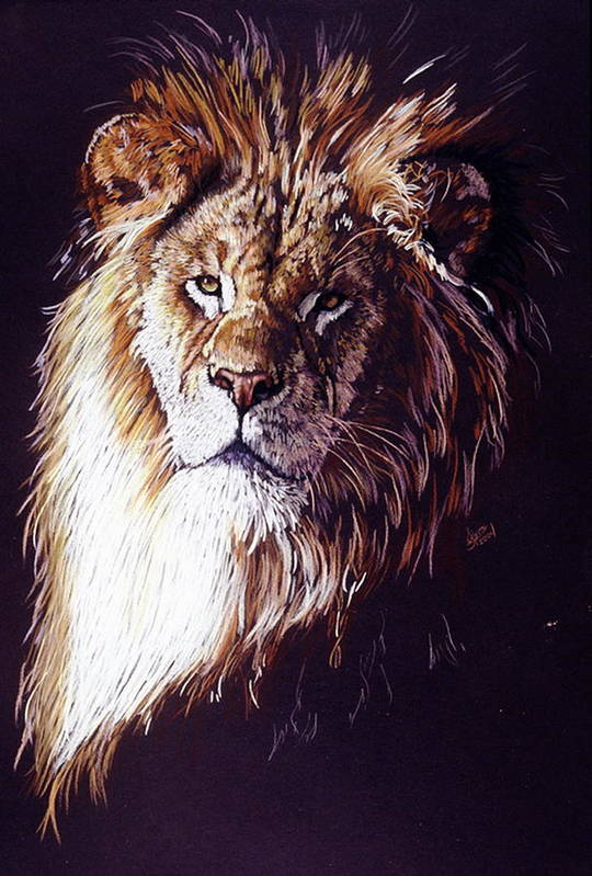 Lion Art Print featuring the drawing Maestro by Barbara Keith