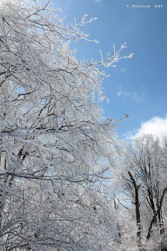 Trees Art Print featuring the photograph March Winters by Carolyn Postelwait