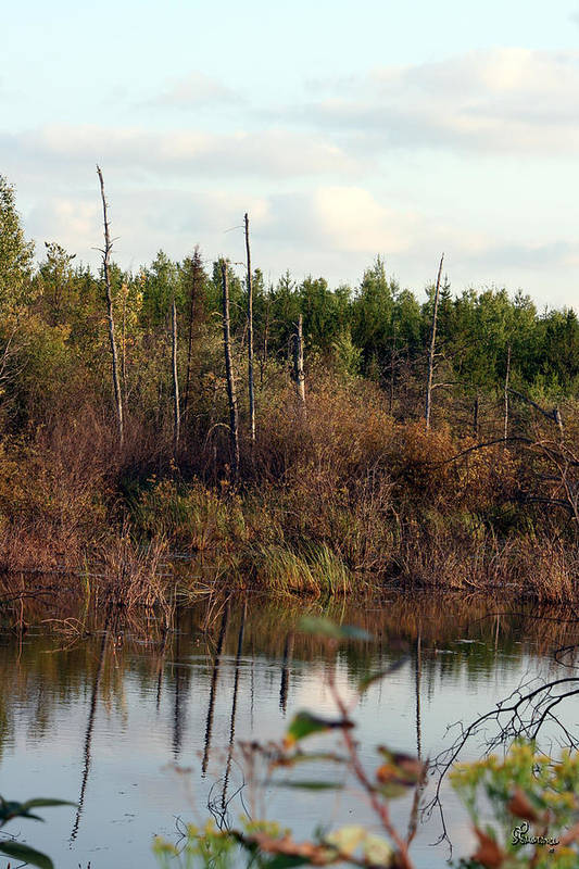 Marsh Lake Water Aquatic Wild Natural Mother Nature Pond Art Print featuring the photograph Marsh by Andrea Lawrence