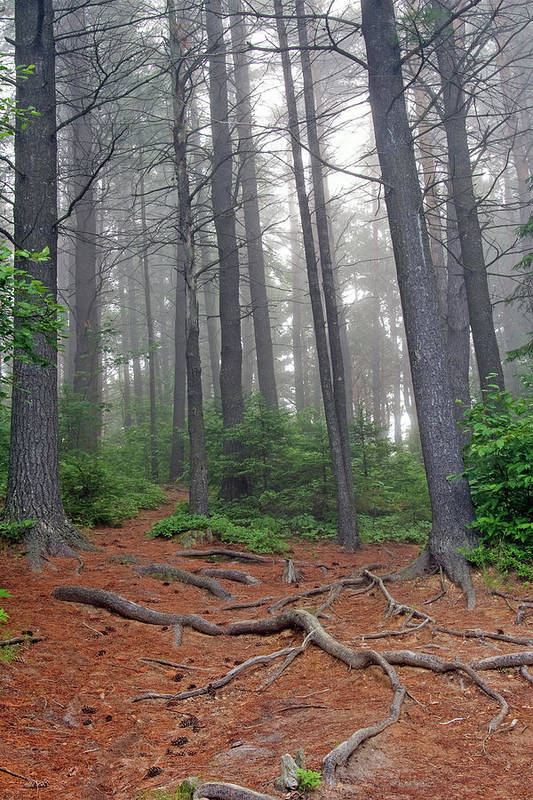 Ontario Art Print featuring the photograph Misty Morning In An Algonquin Forest by Peter Pauer
