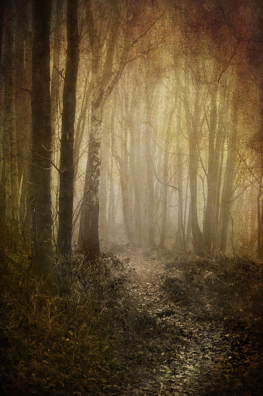 Aged Art Print featuring the photograph Misty Woodland Path by Meirion Matthias