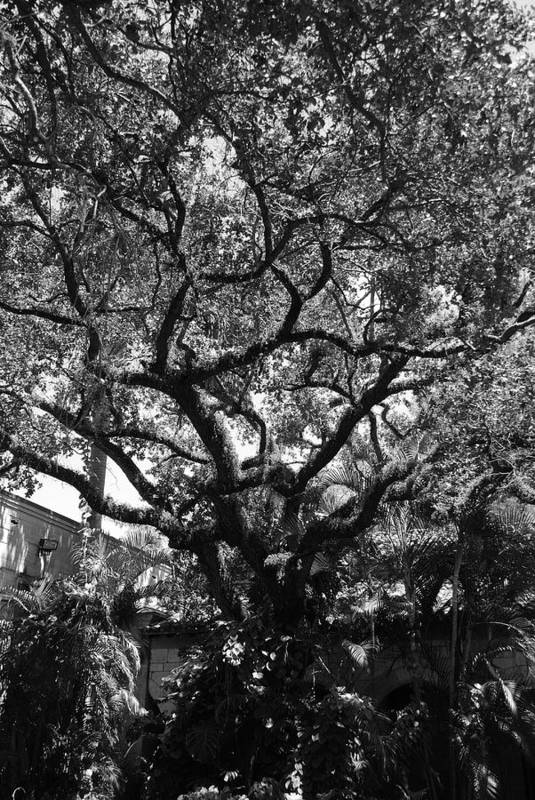 Black And White Art Print featuring the photograph Monastery Tree by Rob Hans