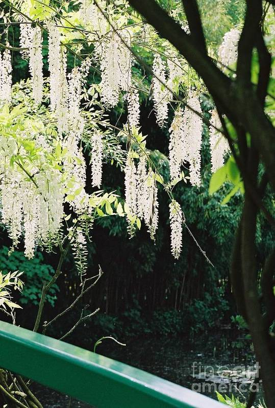 Monet Art Print featuring the photograph Monet's Garden Delights by Nadine Rippelmeyer
