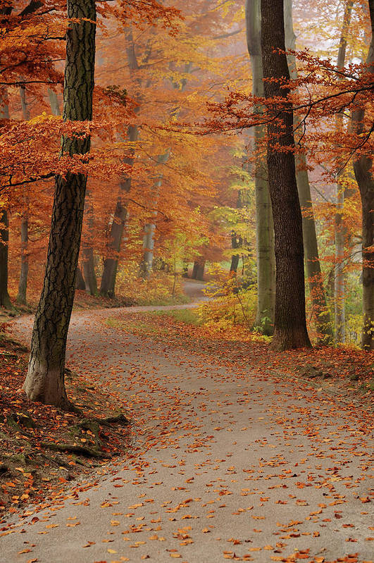 Vertical Art Print featuring the photograph Munich Foliage by Frenzypic By Chris Hoefer