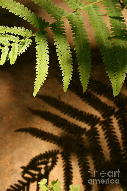 Fern Art Print featuring the photograph My Shadow by Jeannie Burleson