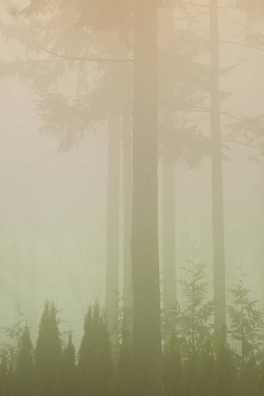 Tree Art Print featuring the photograph Mystic Fog by Hollie Adams