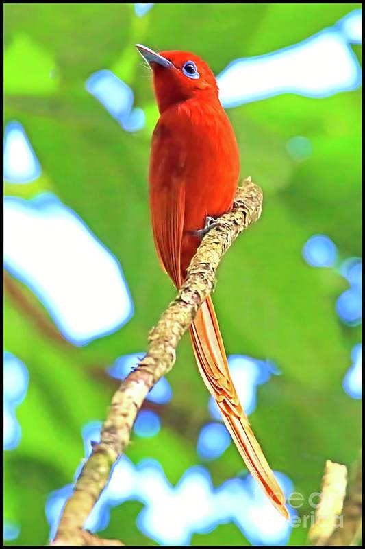 Beautiful Bird Art Print featuring the photograph No Name Bird by Edita De Lima