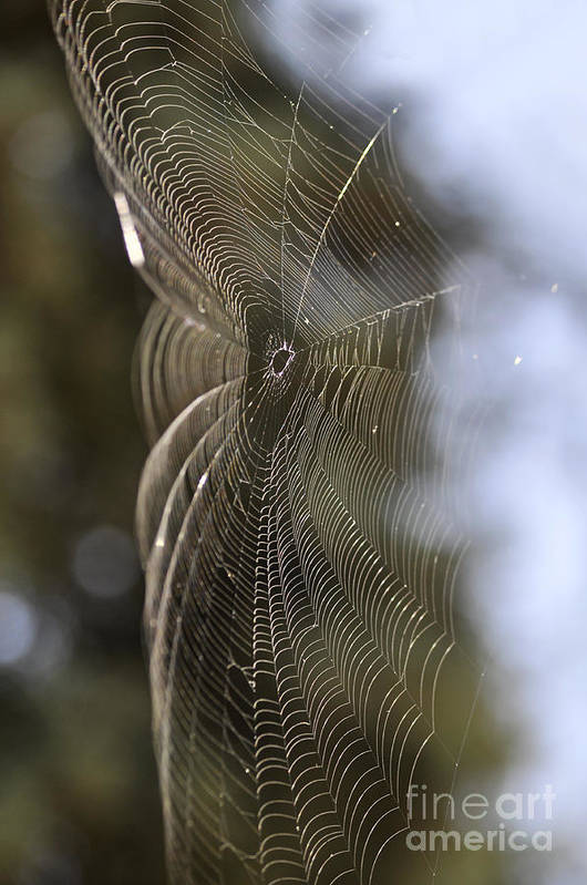 Clay Art Print featuring the photograph Oh What Webs We Weave by Clayton Bruster