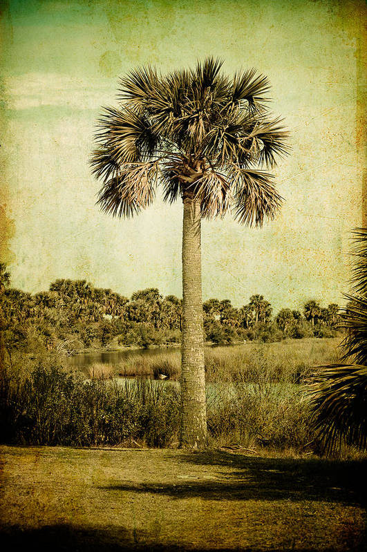 Palm Art Print featuring the photograph Old Florida Palm by Rich Leighton