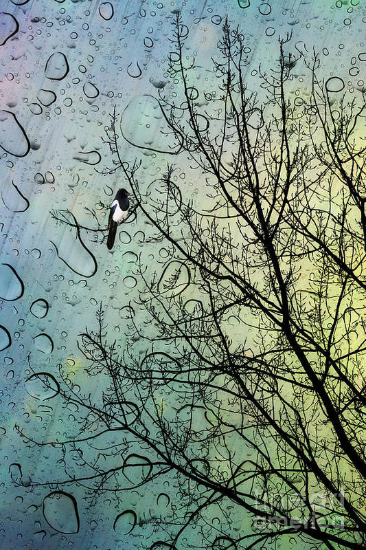 Nursery Art Print featuring the digital art One For Sorrow by John Edwards