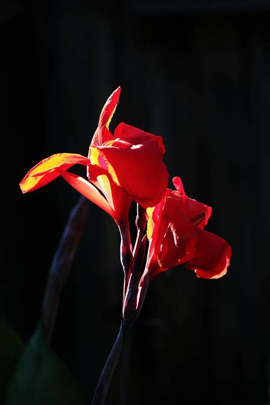 Flower Art Print featuring the photograph Orange On Red by Peggy Burley