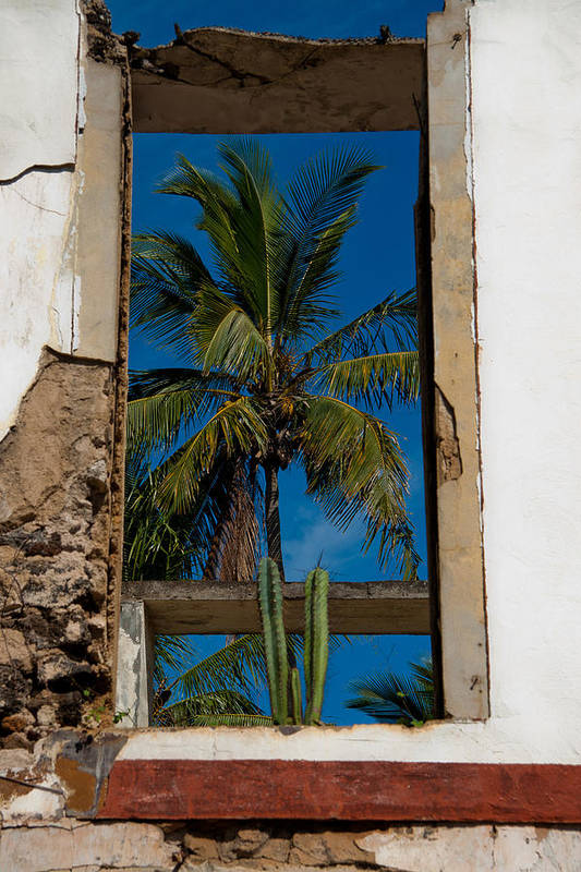 Building Art Print featuring the photograph Palm Tree In The Window by Roger Mullenhour