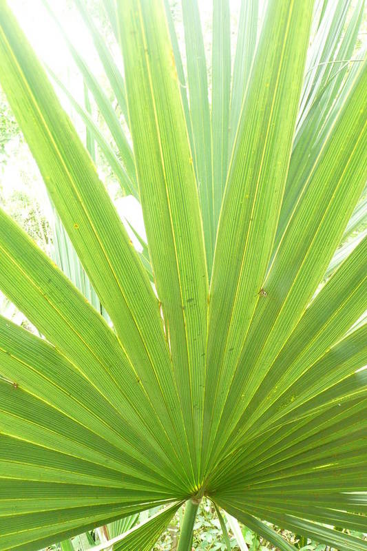 Green Art Print featuring the photograph Palmetto by Kathy Schumann