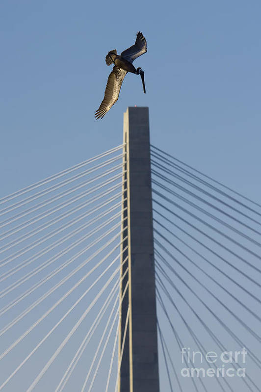 Pelican Art Print featuring the photograph Pelican Diving Arthur Ravenel Jr Bridge Over The Cooper River In Charleston South Carolina by Dustin K Ryan
