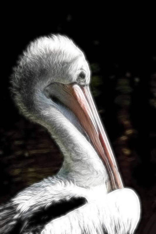 Pelican Art Print featuring the photograph Pelican Dreams by Lesley Smitheringale