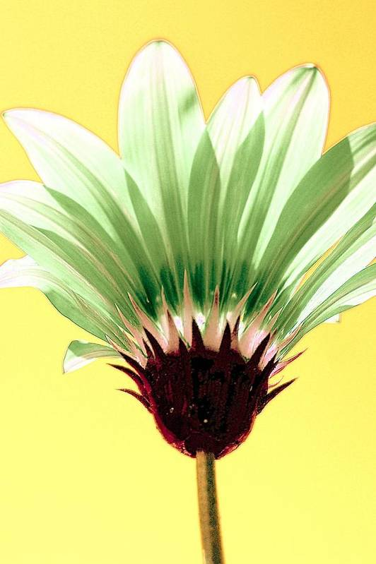 Art Print featuring the painting Pineapple Flower by Filipa Mendes