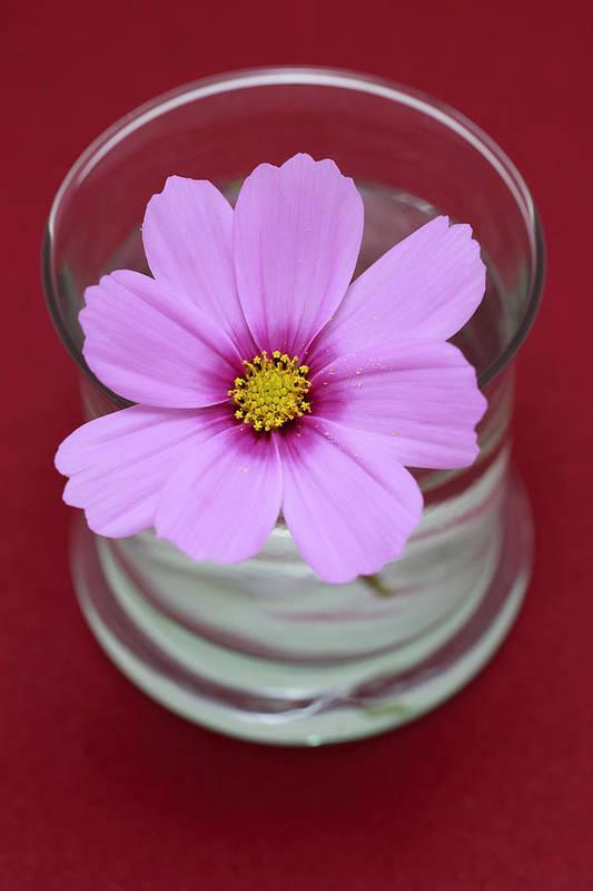 Pink Art Print featuring the photograph Pink Flower by Frank Tschakert