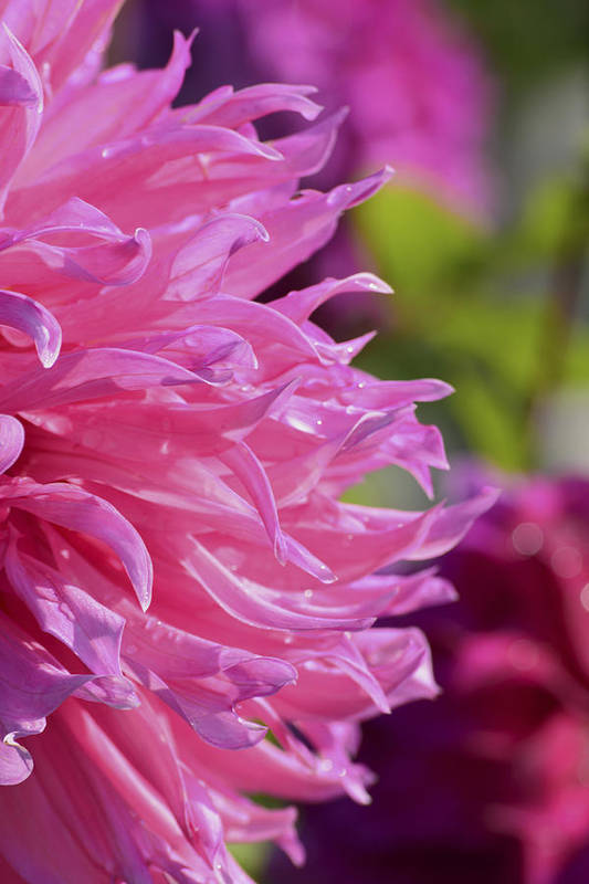 Flowers Art Print featuring the photograph Pink by Forest Floor Photography
