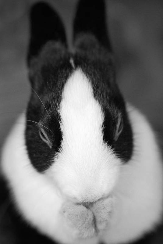 Rabbit Art Print featuring the photograph Please Be Carrots by Fraser Davidson