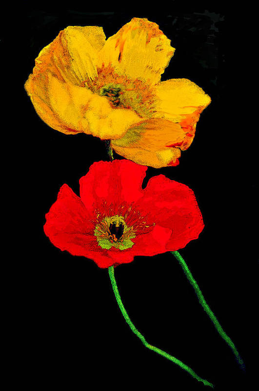 Poppies Art Print featuring the photograph Poppies On Black by Lynn Andrews