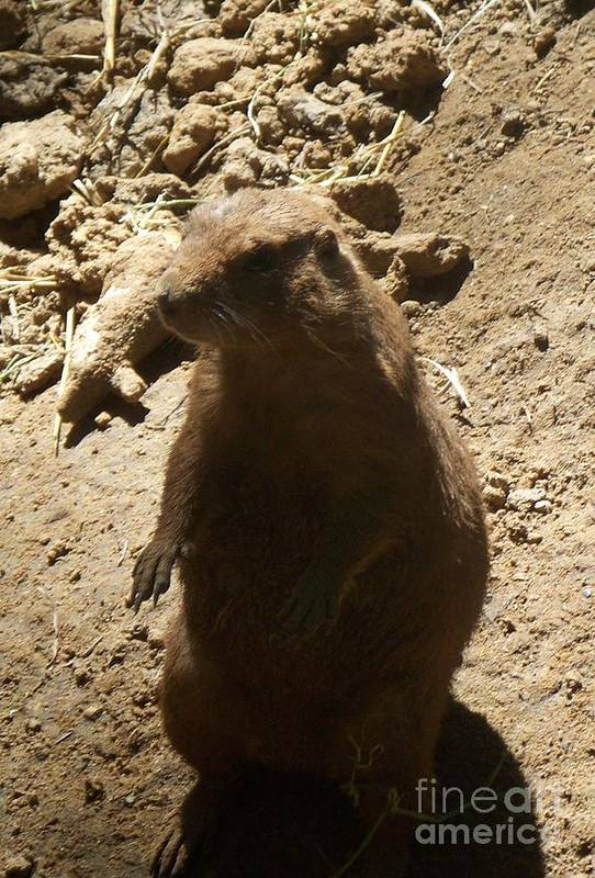 Animal Art Print featuring the photograph Portrait Of A Prarie Dog by Emily Kelley