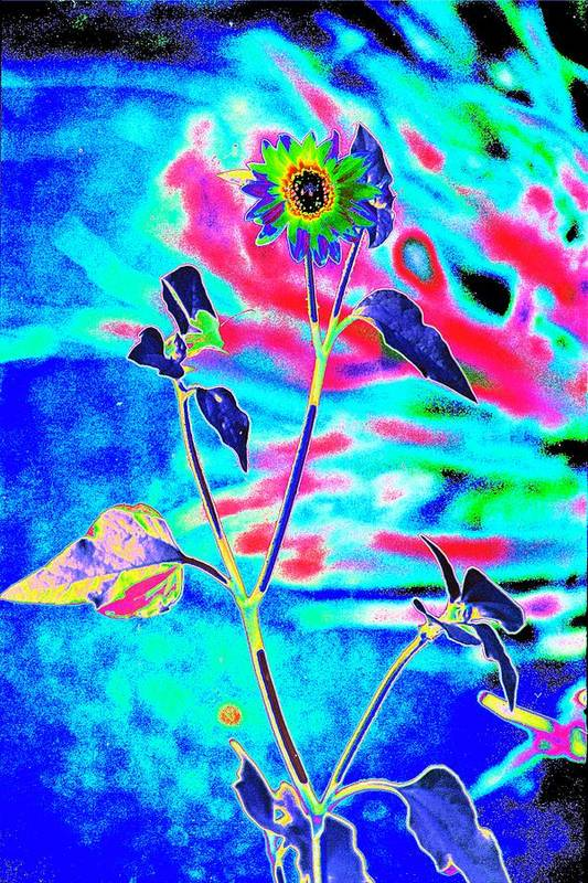 Psychedelicized Daisy Art Print featuring the photograph Psycho Daisy by Richard Henne