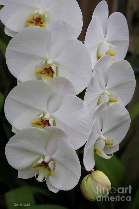 Orchids Art Print featuring the photograph Purity by Deborah Benoit