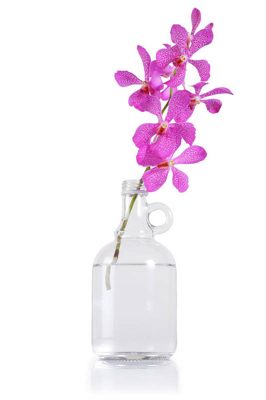 Asian Art Print featuring the photograph Purple Orchid Bunch by Atiketta Sangasaeng