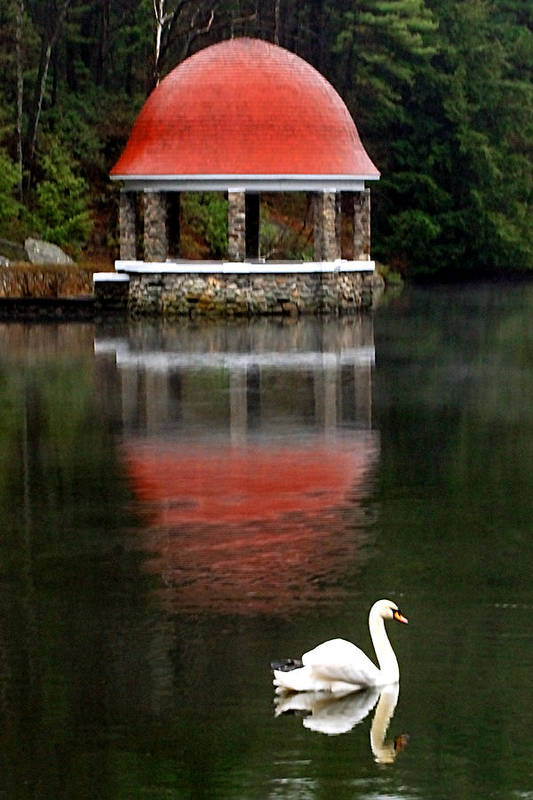 Swan Art Print featuring the photograph Quiet Afternoon by William Bray