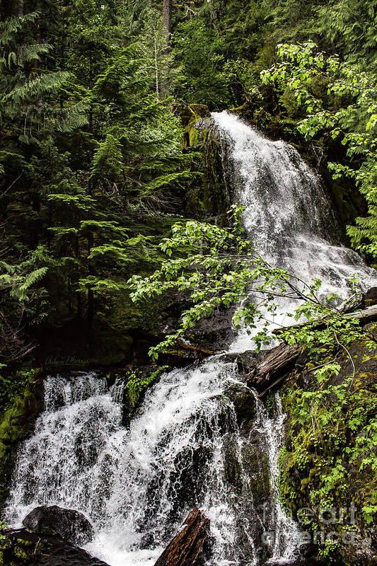 Mount Rainier Art Print featuring the photograph Rainforest Falls by Adam Morsa