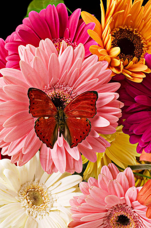 Butterfly Daisy Wings Flower Flowers Petal Petals Floral Art Print featuring the photograph Red Butterfly On Bunch Of Flowers by Garry Gay
