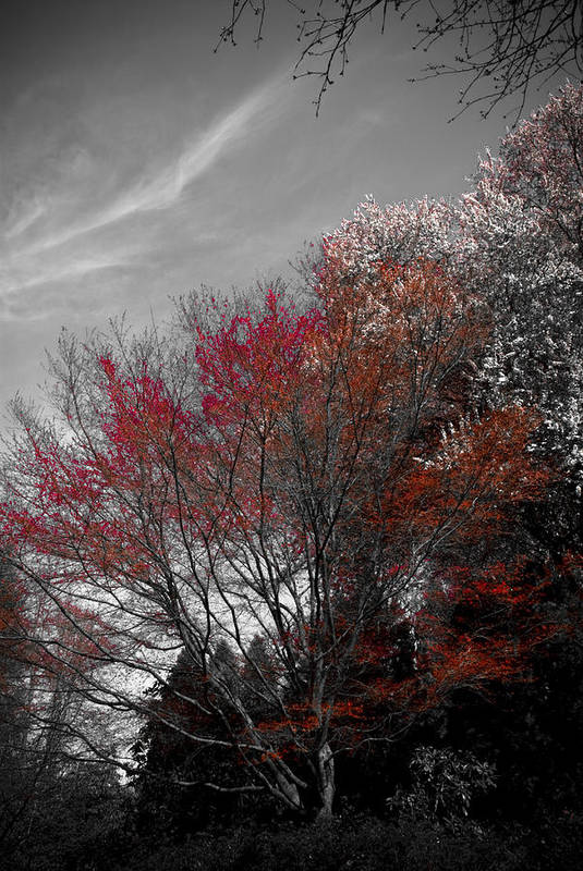 Portland Art Print featuring the photograph Red Trees by Craig Perry-Ollila