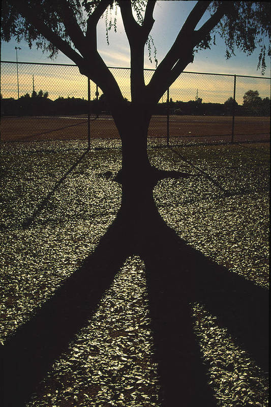 Tree Art Print featuring the photograph Reflections In A Park by Randy Oberg