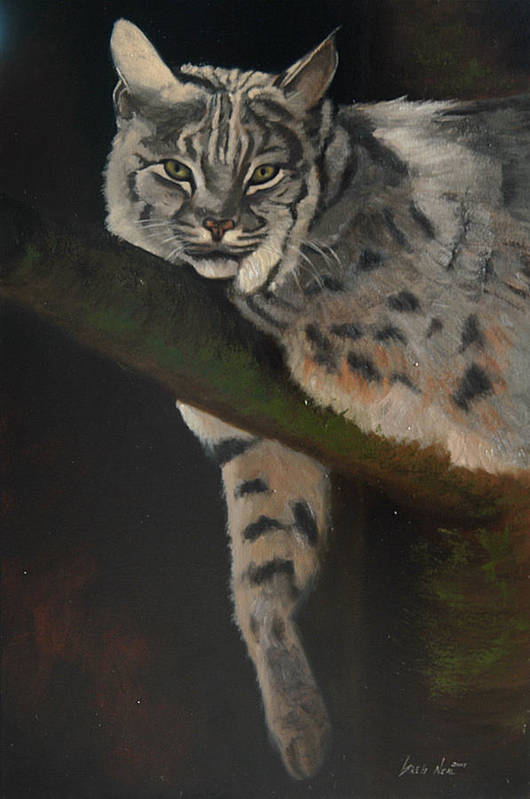 Bobcat Art Print featuring the painting Resting Up High by Greg Neal