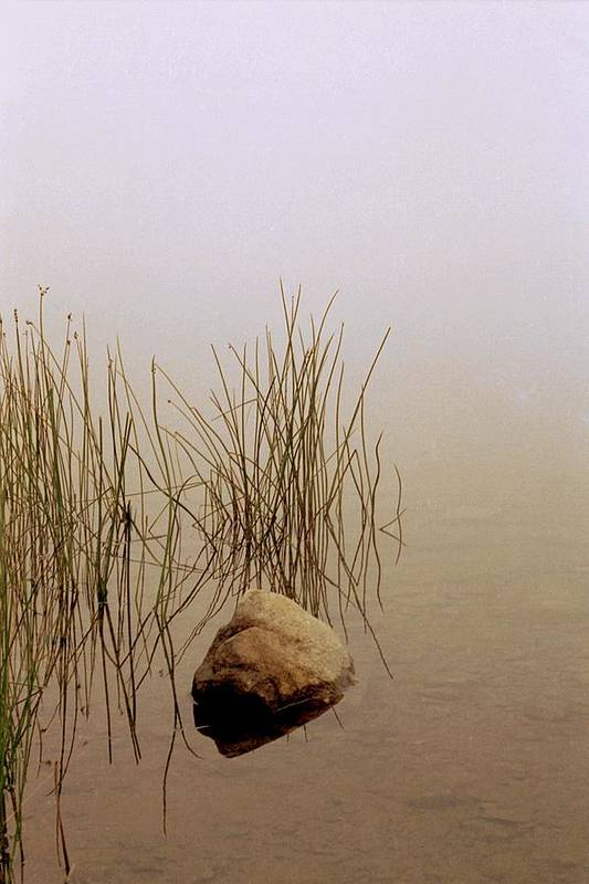 Calm Art Print featuring the photograph Rock And Reeds On Foggy Morning by Roger Soule