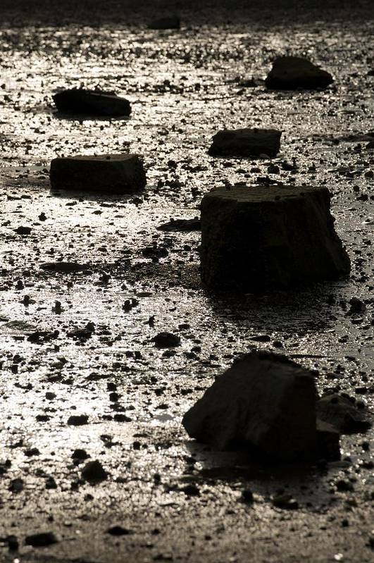Rocks Art Print featuring the photograph Rocks At Low Tide by Gene Sizemore