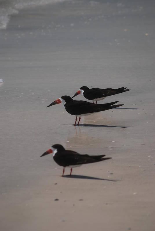 Landscape Art Print featuring the photograph Sea Birds by Lisa Gabrius