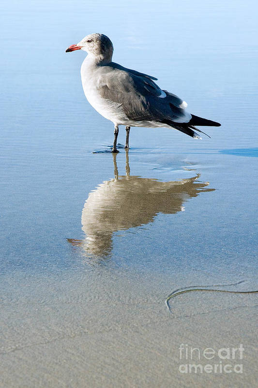 United States Meditation Serene Serenity Contemplating Contemplation Peaceful Sand Reflection Southern California La Jolla Beach Seagull Bird Fauna Animal Nature Calm America American Tranquil Summer Summertime San Diego Reflected Beautiful Gull Seabird Profile Standing Side Laridae Sunny Quiet Art Print featuring the photograph Seagull At La Jolla Shores Beach California by Julia Hiebaum