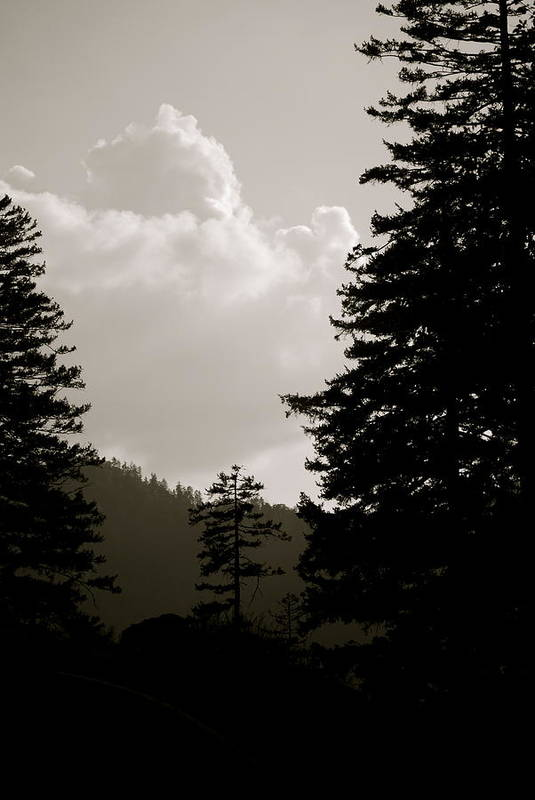 Smokey Print featuring the photograph See The Mountain Through The Trees by Kimberly Camacho