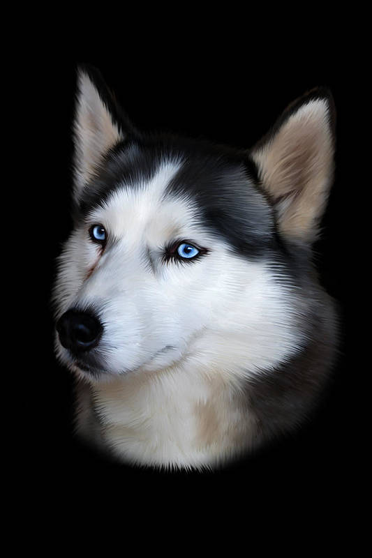 Siberian Art Print featuring the digital art Siberian Husky Dog by Julie L Hoddinott