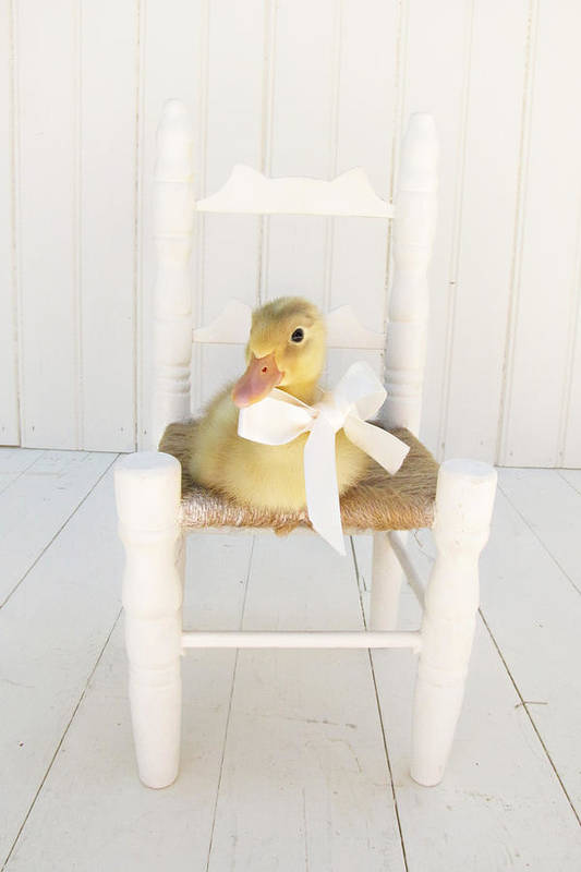 Duckling Art Print featuring the photograph Sitting Pretty by Amy Tyler