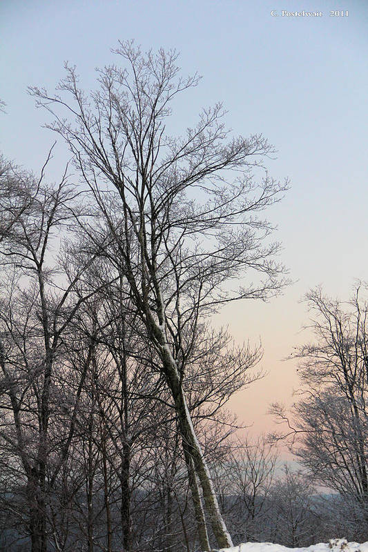 Snow Art Print featuring the photograph Snow Scene by Carolyn Postelwait