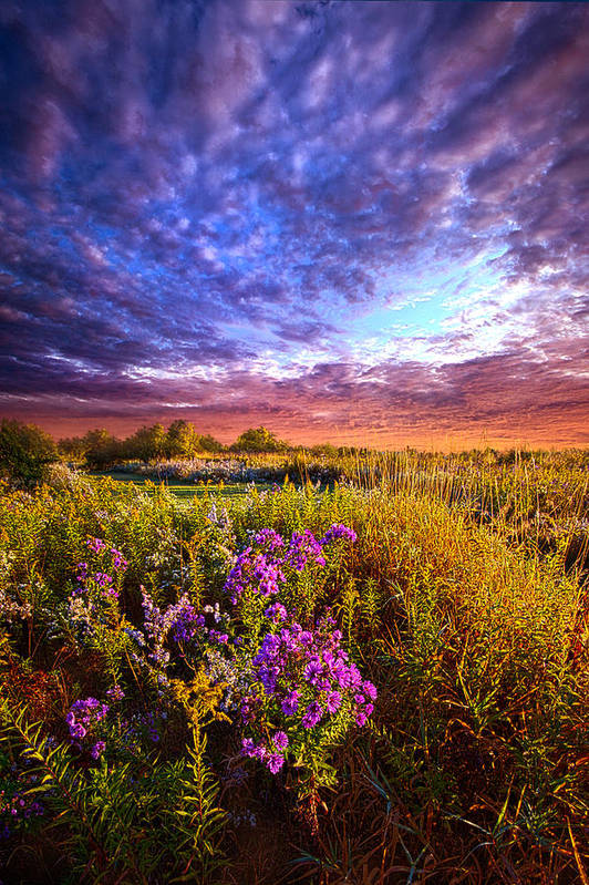 Horizons By Phil Koch. Art Print featuring the photograph Sometimes It Is The Little Things by Phil Koch