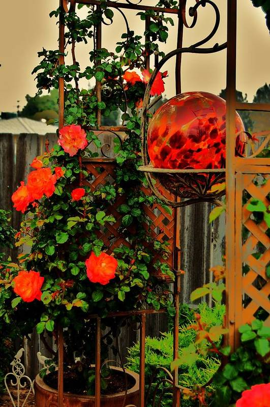 Rose Art Print featuring the photograph Spring Trellis by Helen Carson